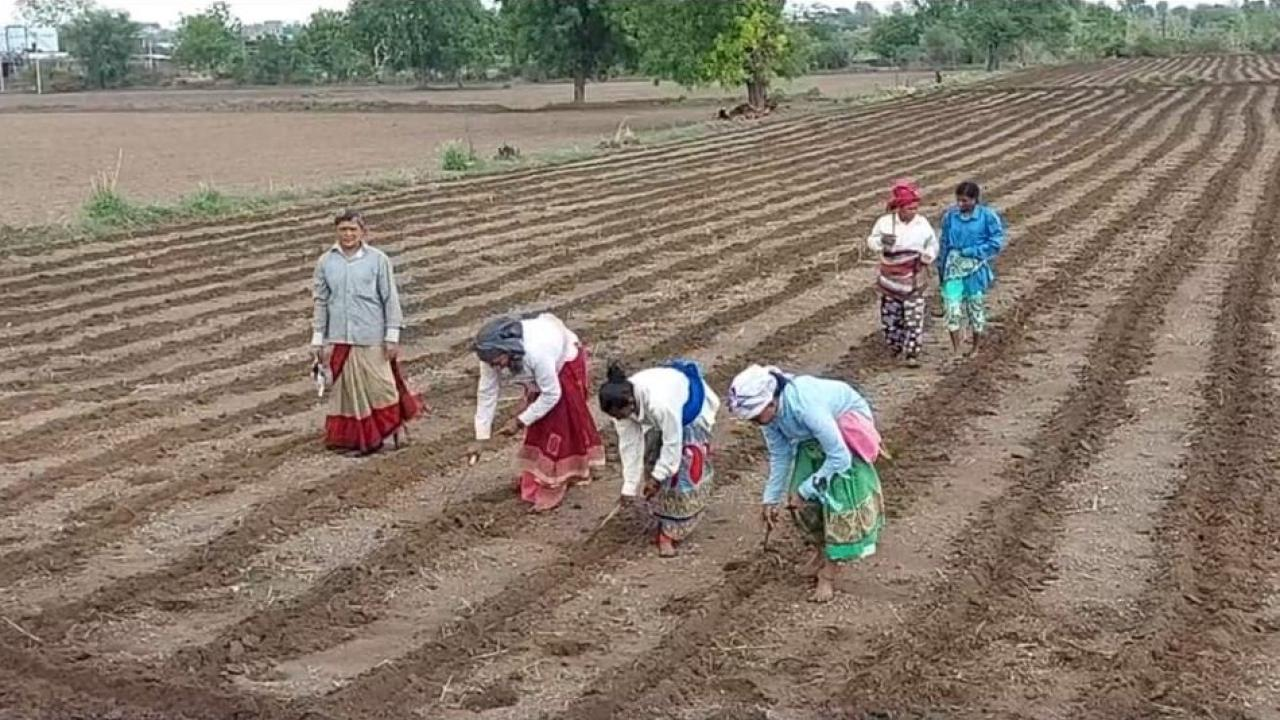 Sowing begins after the first rains of the deer