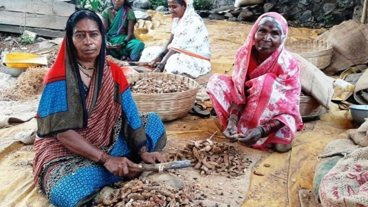 Tamarind Breaking giving good earning to Rural women in Pune District