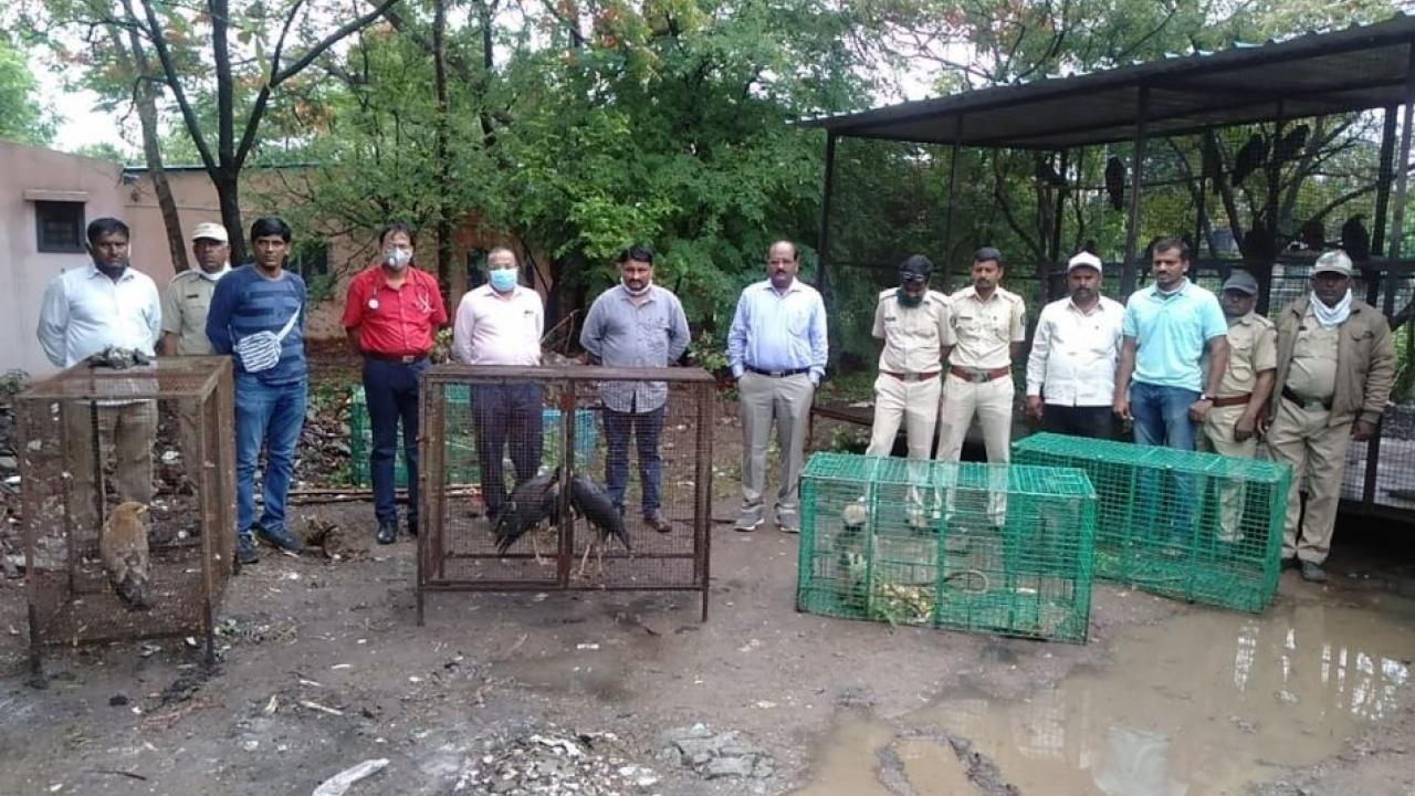 The forest department released the animals and birds from captivity