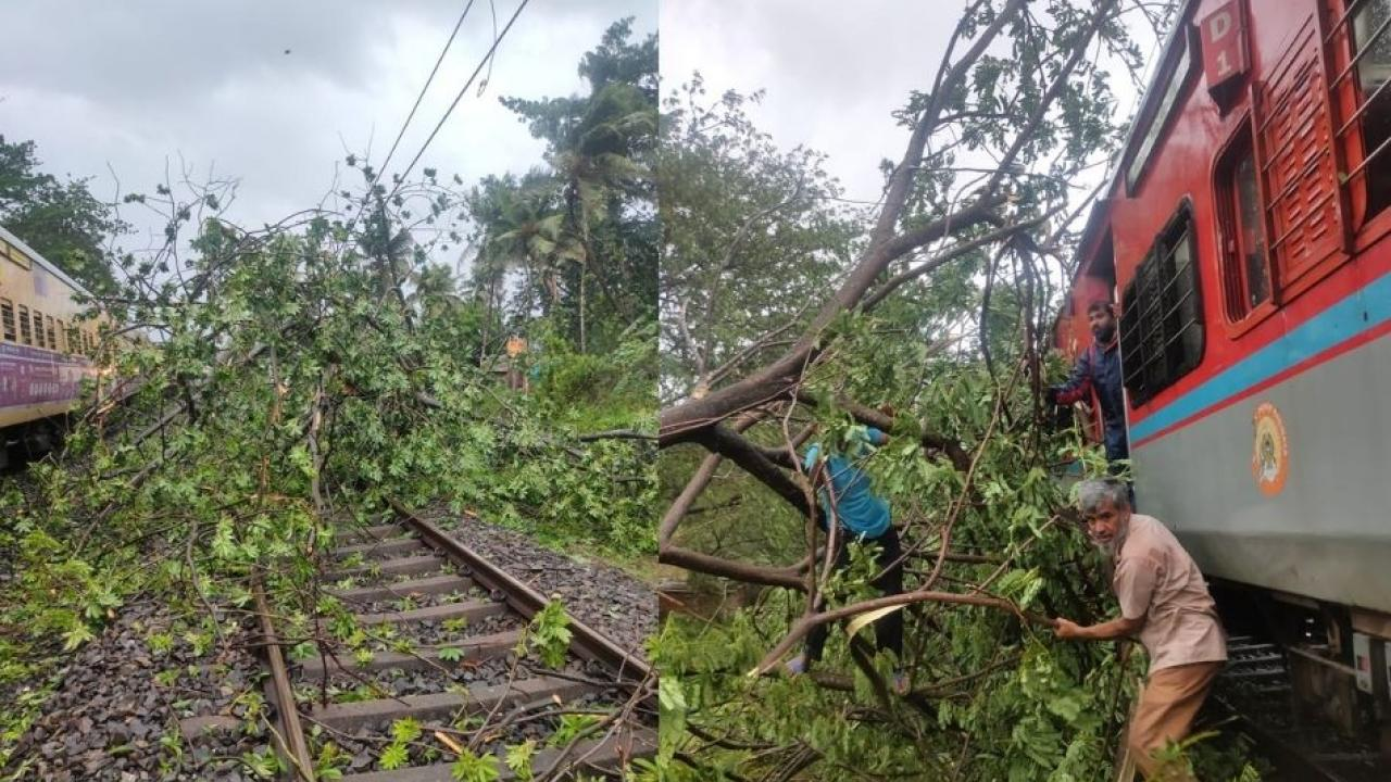 Trees Falled down on Konkan Railway Track