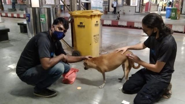 Stray Dogs Steralisation at Railway Stations