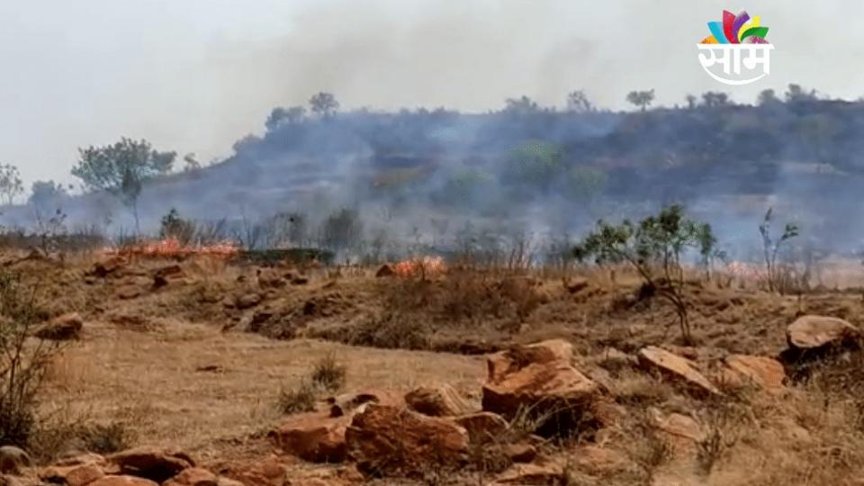 Burn the trees planted by the forest department