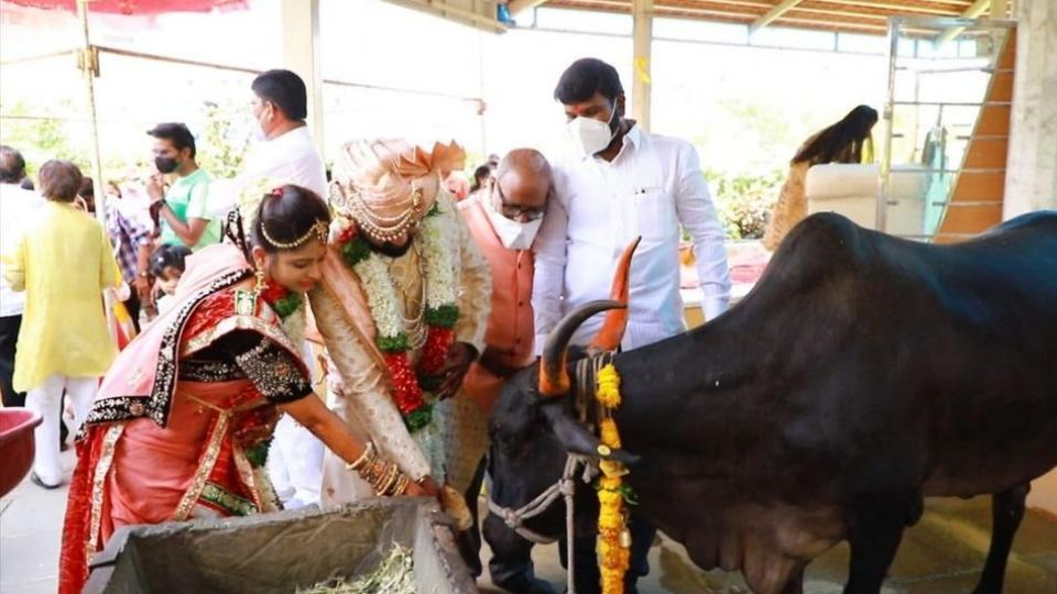 Marriage in Latur Performed in Presense of Cows