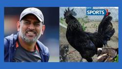 ms dhoni, Cricketer
