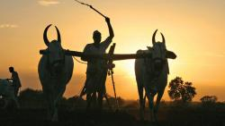 With new Maha offer, farm loan write-offs touch Rs 4.7 lakh cr in last 10 yrs