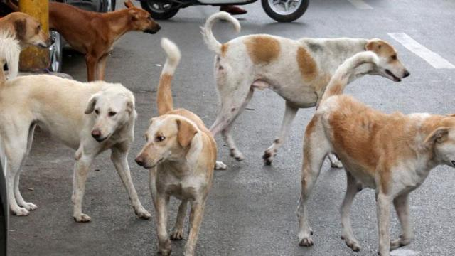 Pune lockdown: Dog bite cases dip as humans stay safe at home