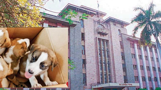PMC Health Dept to draft policy for pet animals in Pune