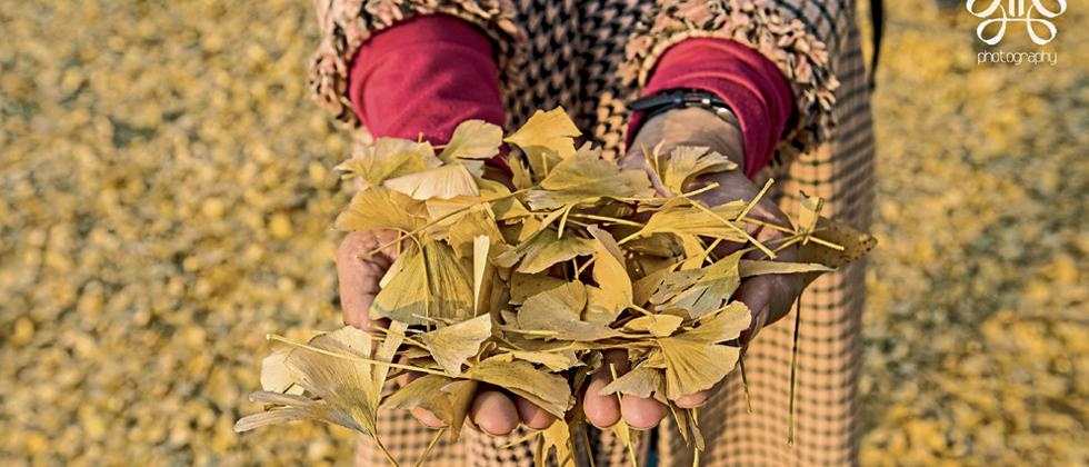 The foliage takes a different hue in winter (Pic: Kaynat Kazi)