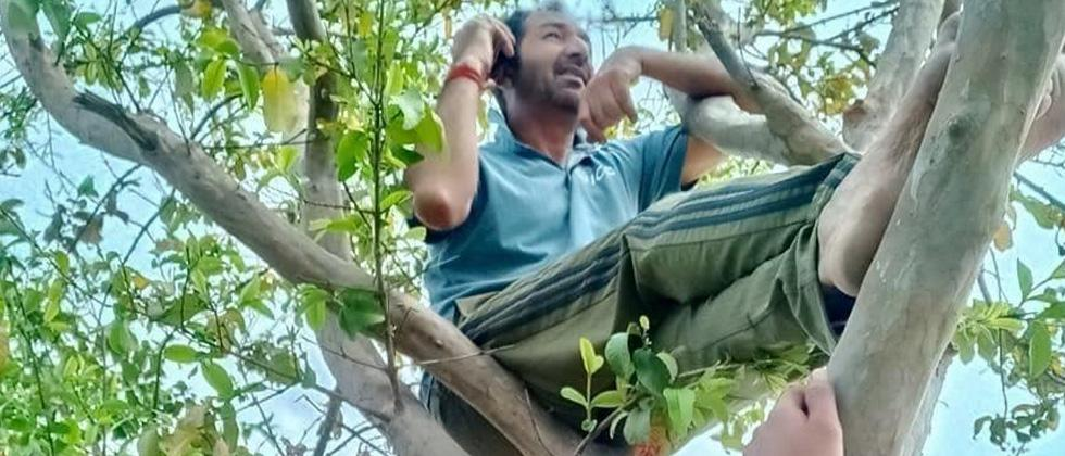 COVID crisis: Cricket umpire Anil Chaudhary climbs up trees in ...