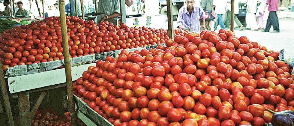 As prices of tomatoes fall, farmers hope for solutions