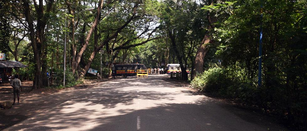 Aarey Protest: Conditional Bail For 29 Protesters