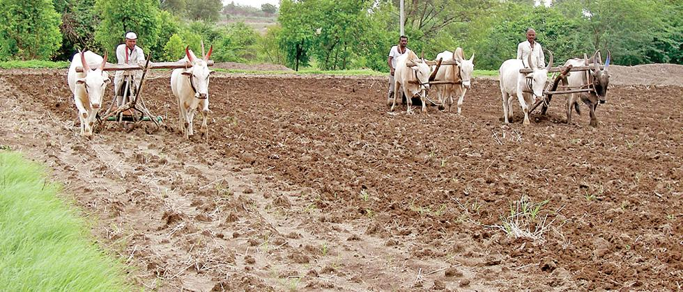 Coronavirus India: FICCI suggests ways to bail out agriculture and allied sectors