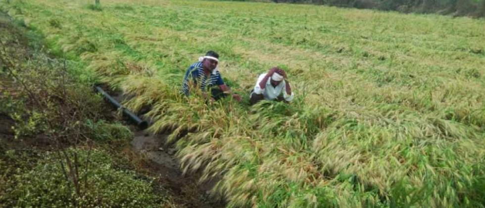 Rain damages 7.6K hectares of agri land
