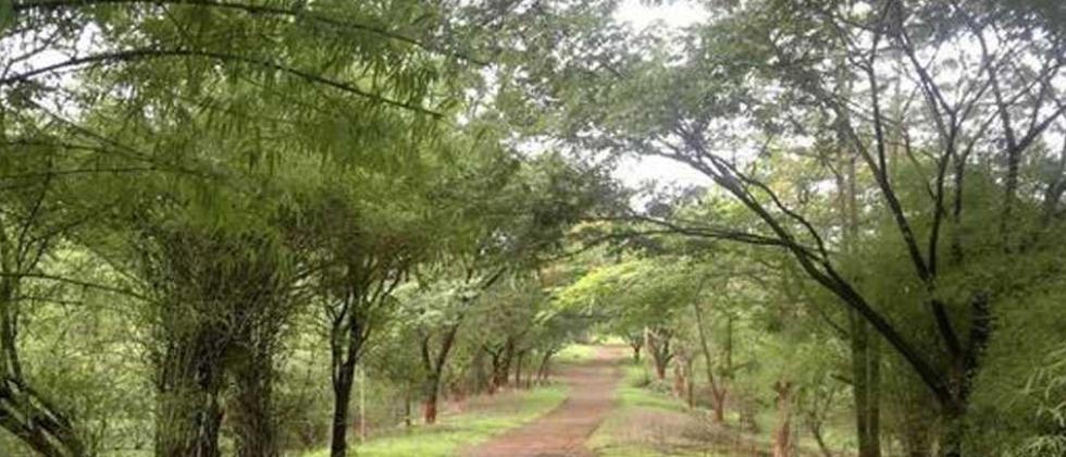 "HC dismisses petitions on Aarey, says greens have ""failed"""