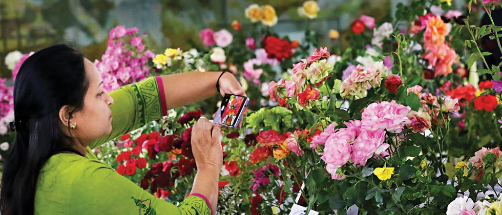 101st Rose Exhibition concludes