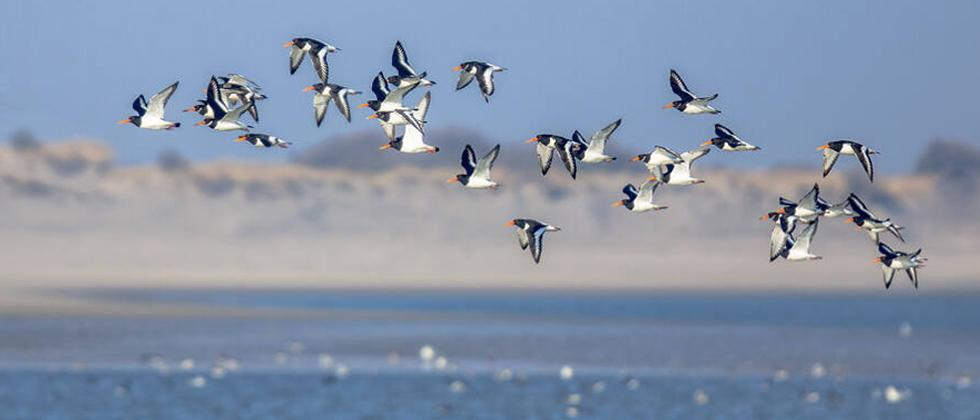 Conference on migratory birds to be held from Nov 18