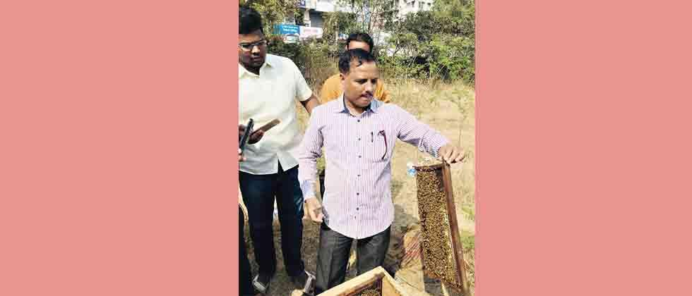 Low rainfall affects honey production in Latur