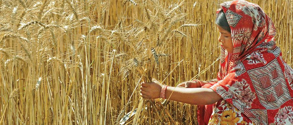 Area under rabi crops may go up by 20 pc in the State