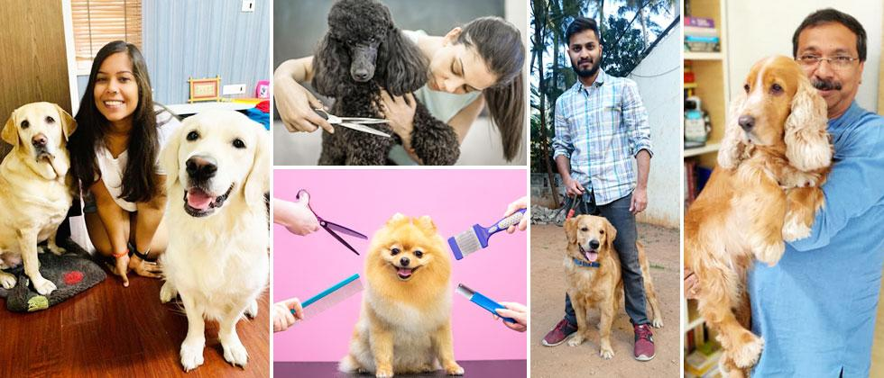 Groom your pet at home during COVID