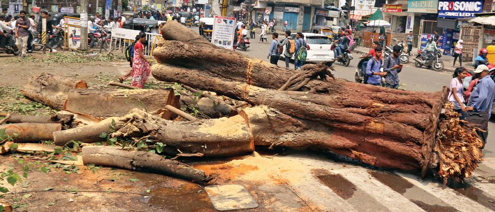 City faces waterlogging, tree falling in various parts
