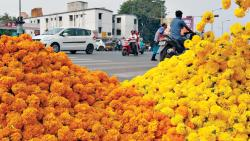 Prices Of Flowers Go Skywards as Navratri Festival Arrives