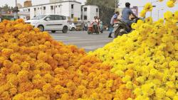 Pune: Flower prices shoot up as heavy rain damages crop
