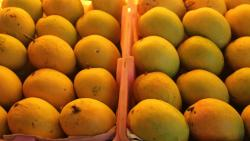 The coronavirus lockdown is affecting market demand and export for mangoes.