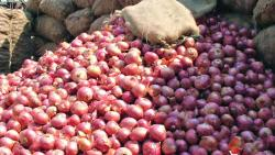 Onion prices slip 40 pc as supply rises