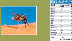 #Throwback2019: Rise in vector-borne diseases across Maharashtra this year
