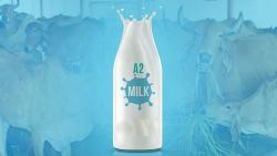 World Milk Day: Incredible benefits of A2 milk