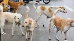 Coronavirus lockdown: Animal right activists take care of stray animals