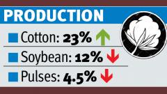 'Cotton output is likely to be 23 pc higher'