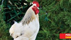 'Provide poultry feed at subsidised rate'