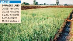1.36 lakh hectares farmland damaged in Pune Division