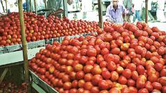 Short shelf life affects tomato growers badly