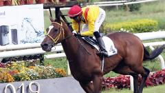 Bronx nails challengers to win RWITC Gold Cup