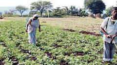 A file photo of workers spraying pesticide in a farm.