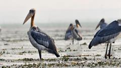 India has 69.2 million acres wetland