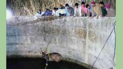 Sambar deer and civet saved from drowning