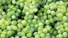Grapes The Latest Victims Of Excessive Rains In State