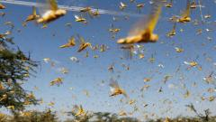 Union Minister Narendra Singh Tomar reports damage to crops due to locust attack