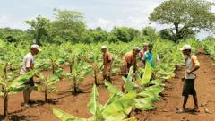 Pune: The Union Minister of Agriculture and Farmers Welfare Narendra Singh Tomar in Rajya Sabha on Friday informed that the Government constituted an Inter-ministerial Committee in April 2016 to examine issues relating to Doubling of Farmers Income (DFI)