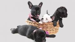 First dog breeders' licences in the country to be issued in Pune dist