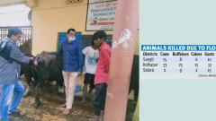 State, NGO join hands to rescue flood-hit animals