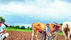 Country sees 17 pc rainfall deficiency