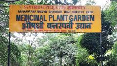 Soon, centre to conserve medicinal plants at SPPU