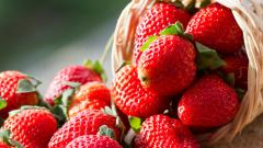 You may miss eating Strawberries this winter