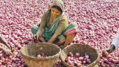 No takers for poor quality kharif crop of onions
