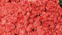 45 lakh roses exported for Valentine's Day