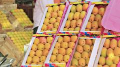 Rains delay mango flowering, supply hit